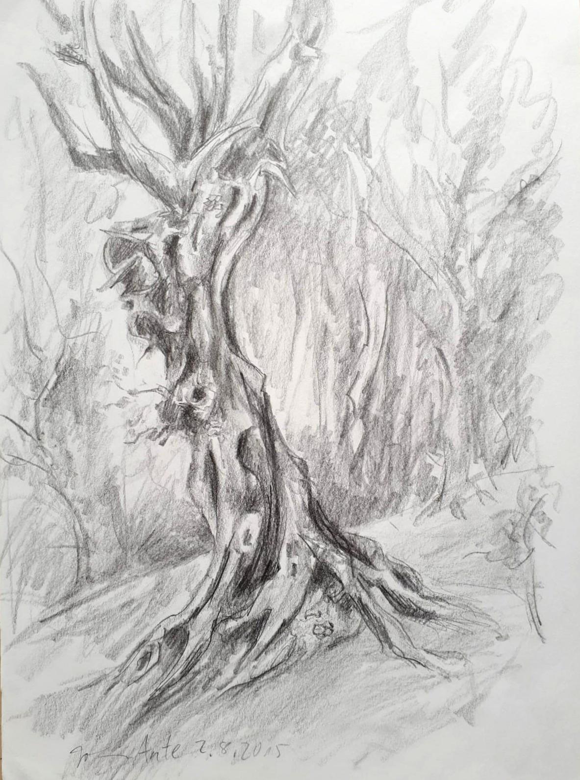 Knorrigen Baum, Bleistiftzeichnung, 02.08.2015