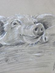 Lustiges Schwein, 11.10.2014