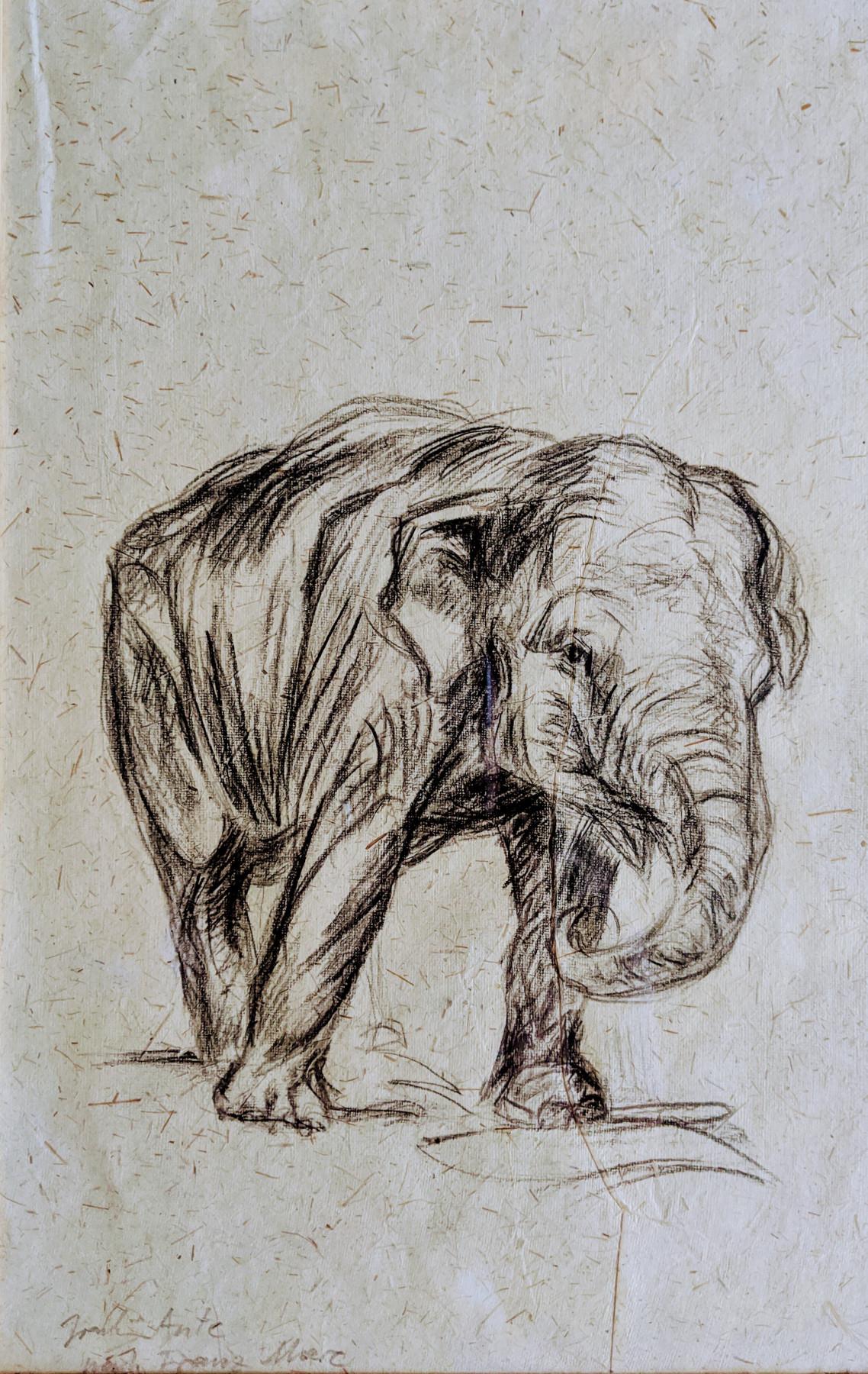 Elefant, Datum unbekannt