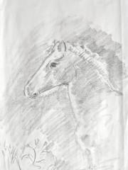 Fohlen, Bleistiftzeichnung, 02.04.2004