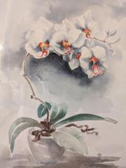 Orchidee, 27.01.2016